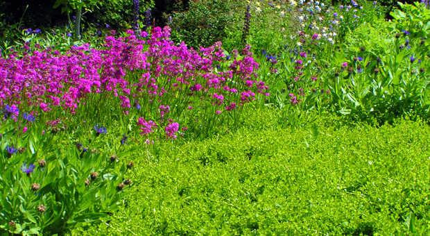 Bodendecker: Immergrüne oder bunte Gartenteppiche